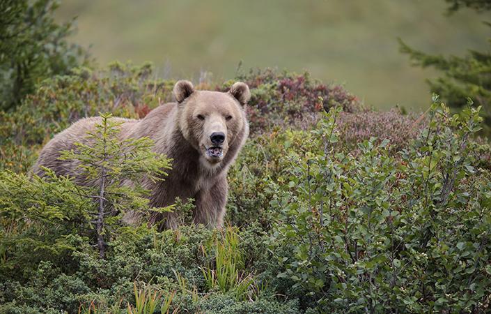 Bärenland Arosa: Nachhaltiger Tierschutz in den Bergen Graubündens