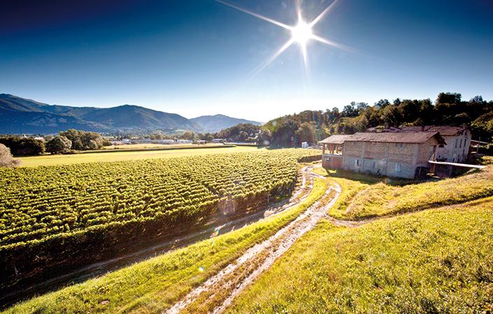 Weinwanderwege im Mendrisiotto – der Toskana der Schweiz