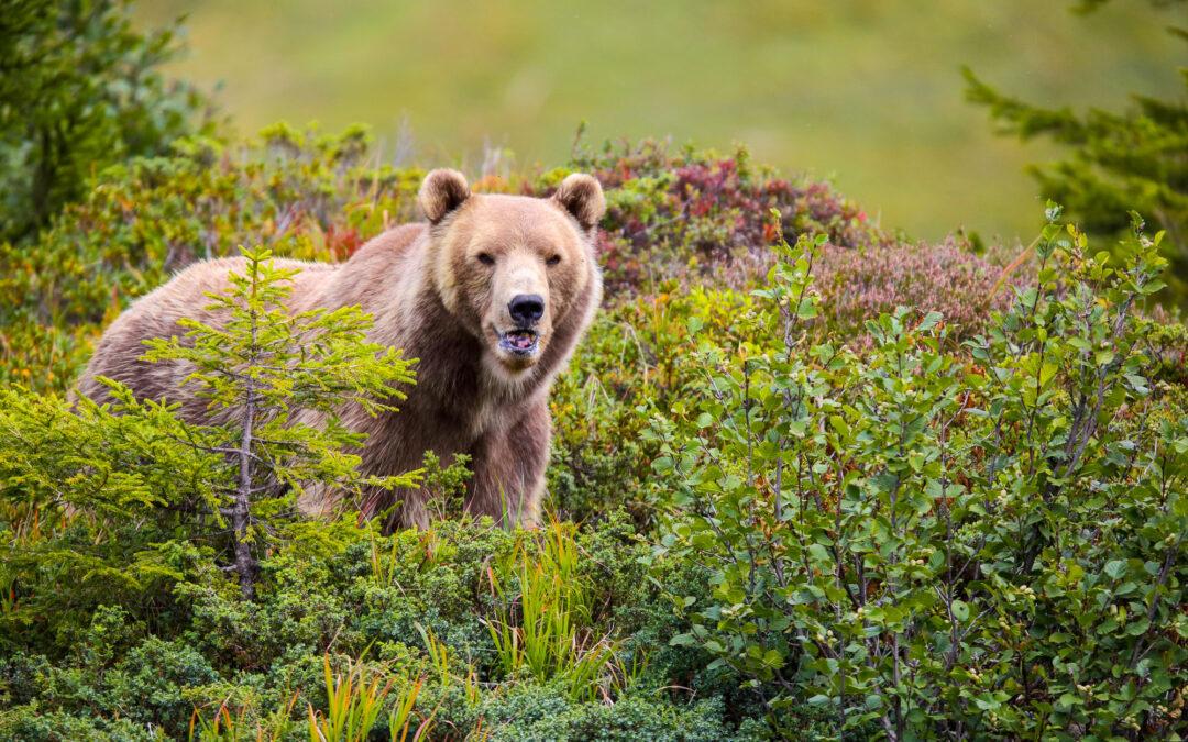 Arosa Bärenland