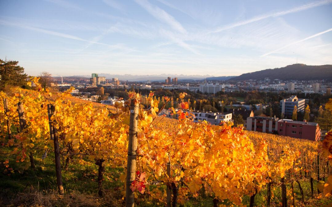 Weinkultur am Zürichsee